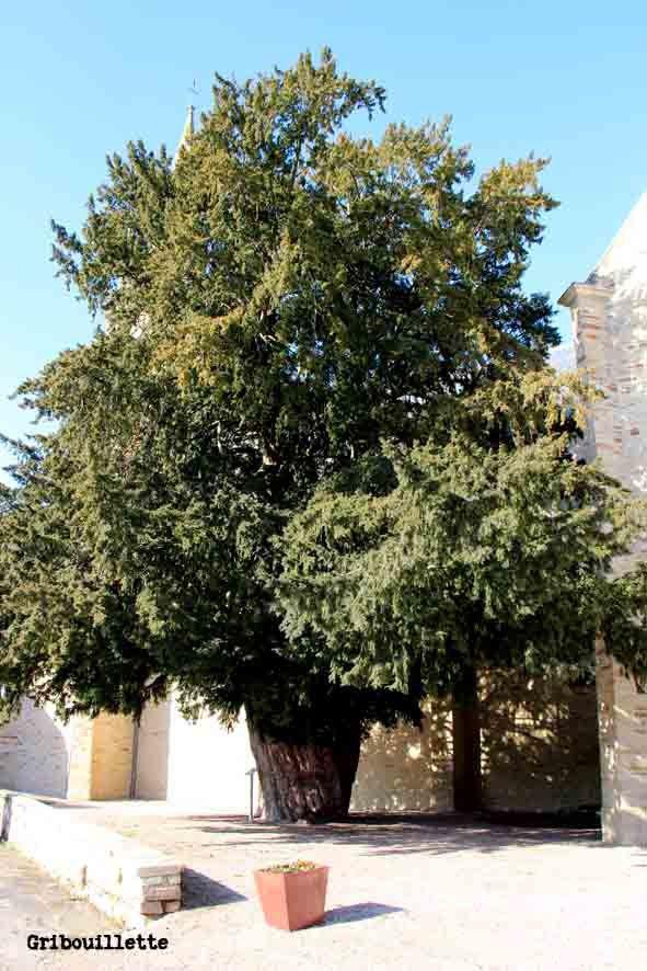 If remarquable de la Chapelle-Caro (Morbihan)