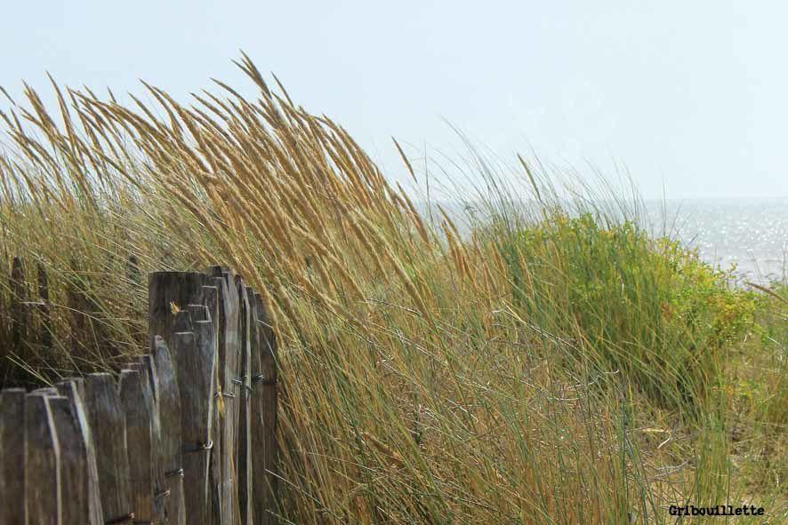 1 semaine/1 image_sujet#14_Légèreté_Herbes sur la dune