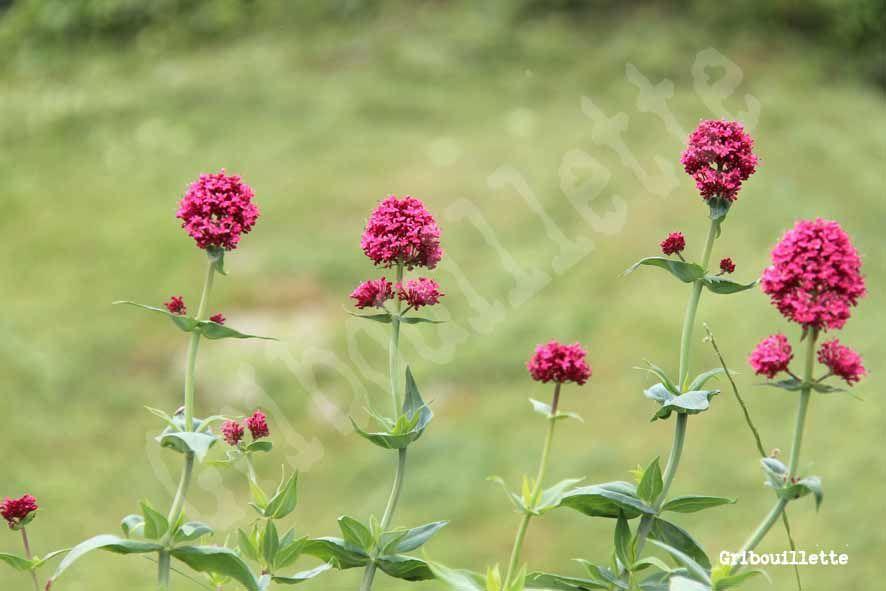 P52#21_Série photo_Fleurs des prés
