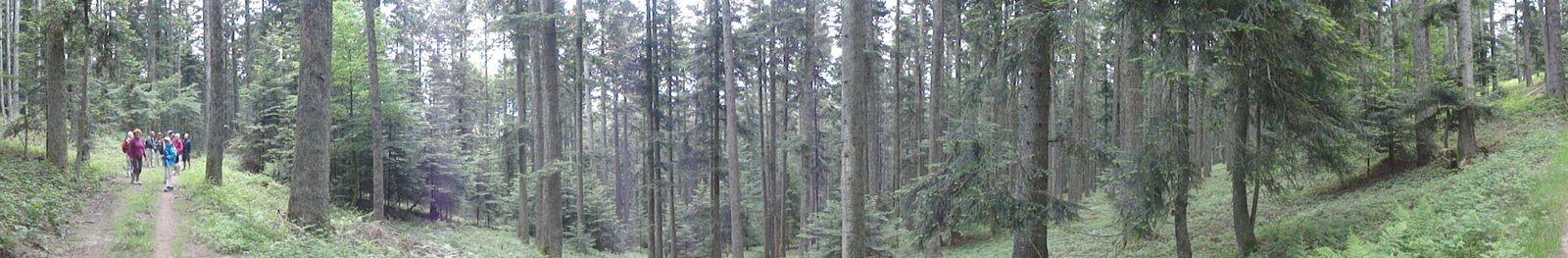 Nous retournons dans les bois pour le retour.