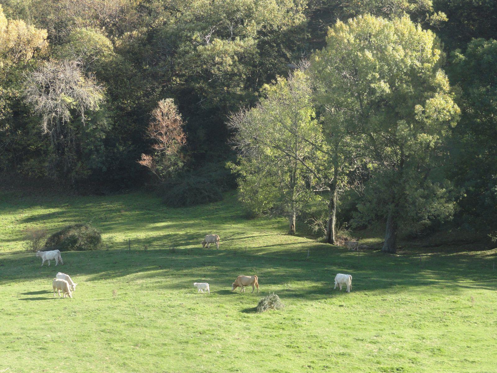 Comme dirait Thérèse : ce paysage est bucolique !!!