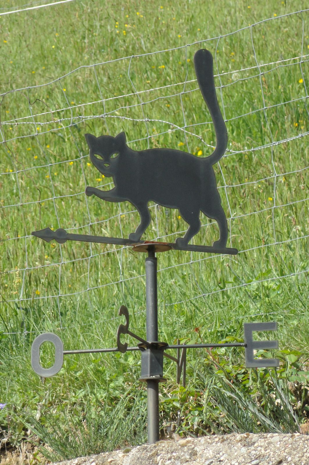 Le chat nous montre la direction.