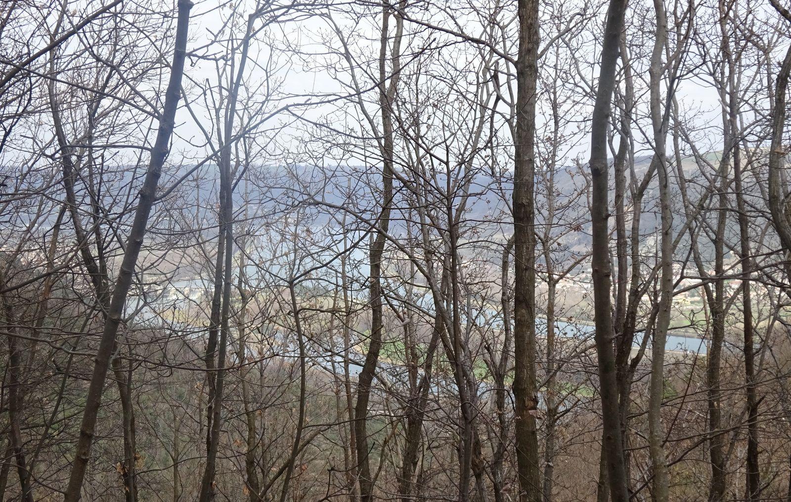On peut voir le Rhône à travers les arbres. Plus pour longtemps ! Ça bourgeonne !