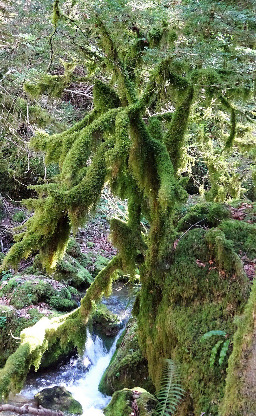 .... et créait une drôle de végétation .....
