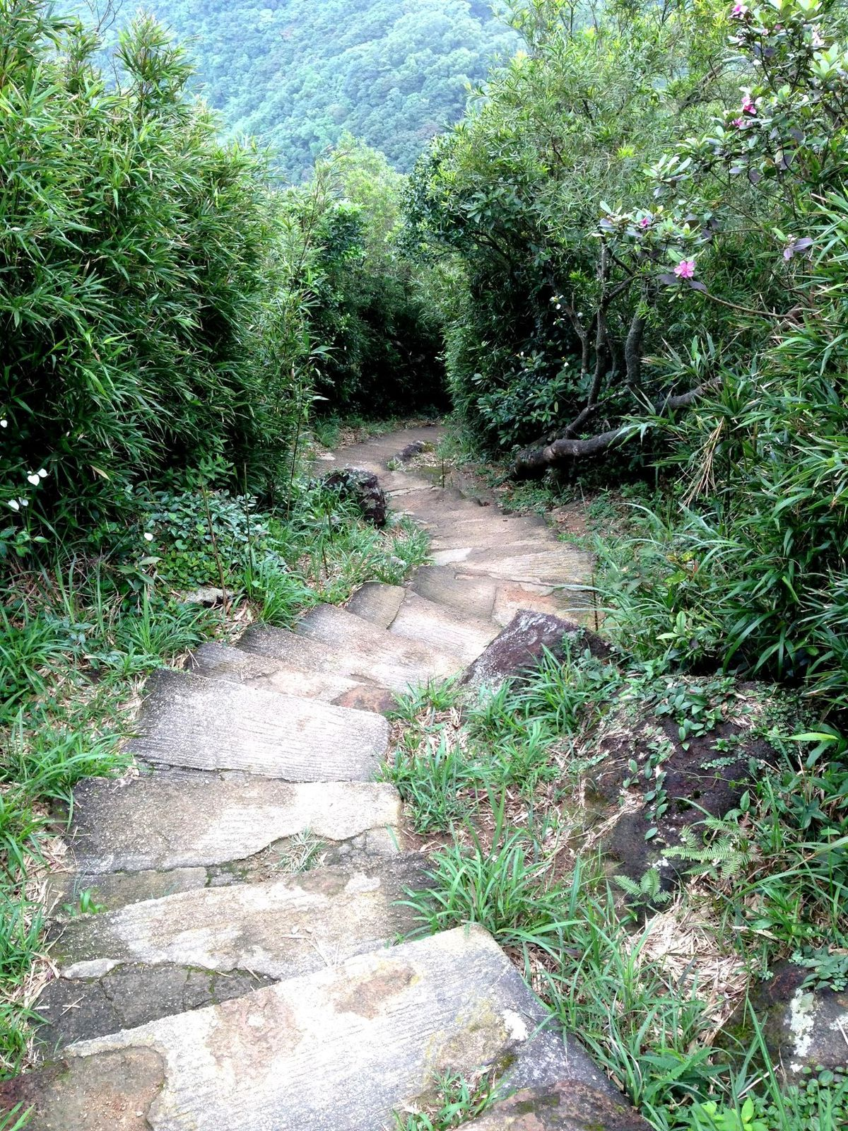 Hong Kong Trail Stage 5&amp&#x3B;6