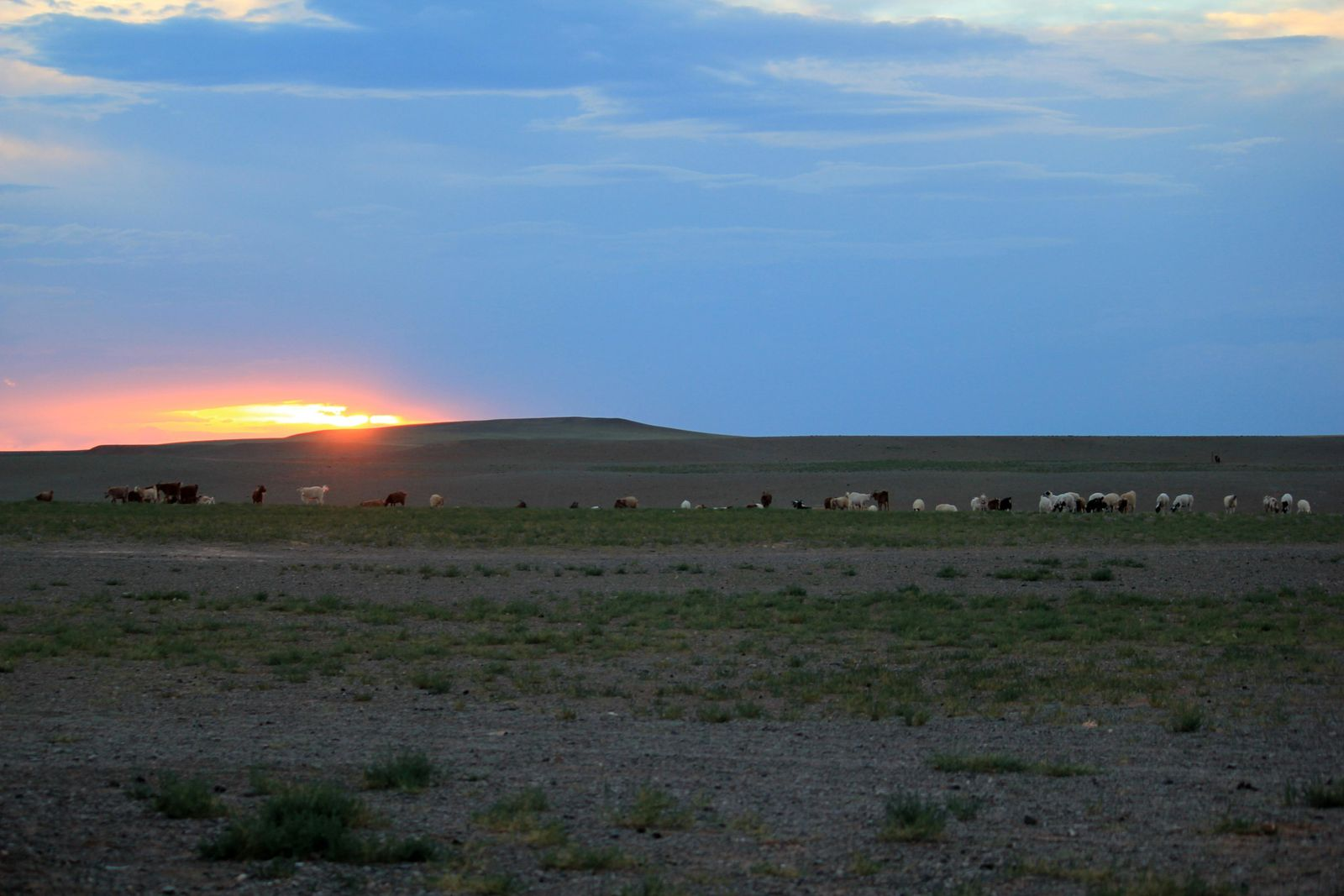 Mongolian pieces of life in the Gobi - Part 3