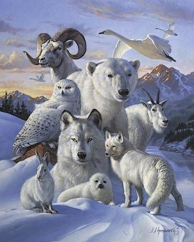Comment les loups changent les rivières