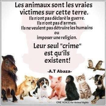 Nos Amis Maux