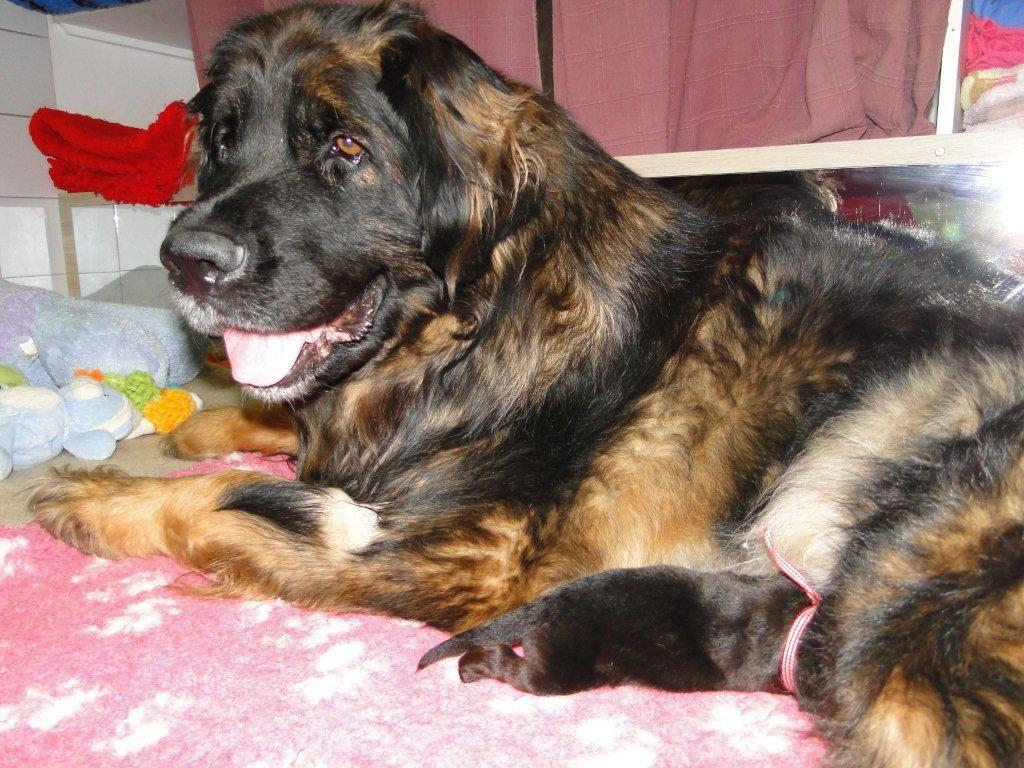 Premier contact pour les bébés chiens....