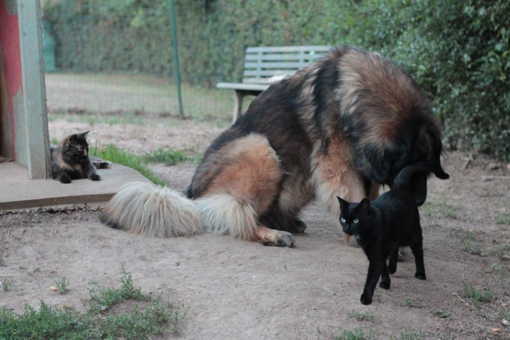 Mais si !! ....Hellcat est sortie de son canapé, elle est là, à gauche sur les photos ! :-D