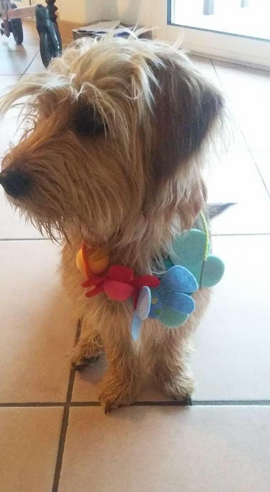 Nouveau collier pour chien