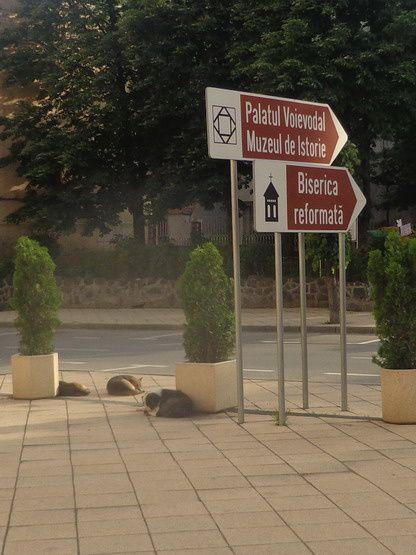 Monumentele Turzii