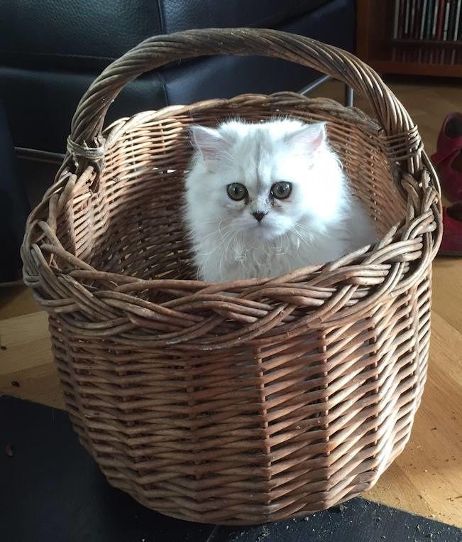 Un chaton marin