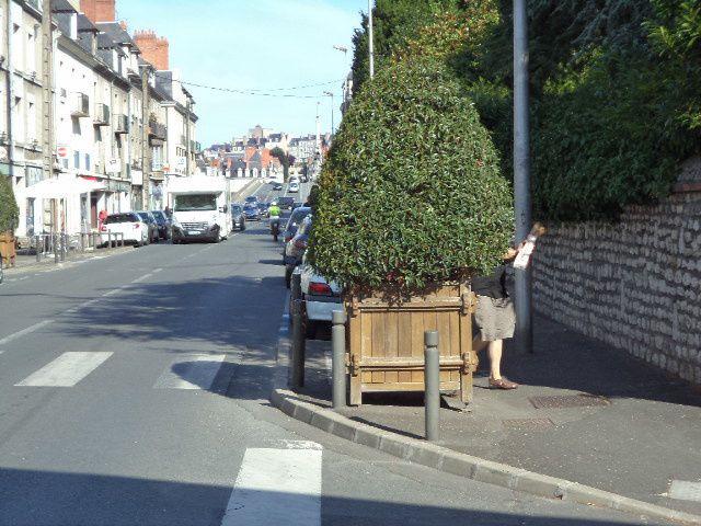 Blois - avenue Wilson - Les automobilistes ont-ils le temps de voir les piétons ?  à l'angle de la rue des Corderies, un arbuste en pot est posé au bord de la chaussée juste en amont d'un passage piéton. Il masque le piéton