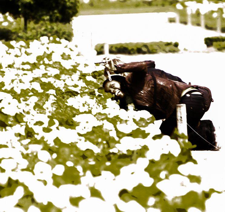 les photographes du Jardin des Plantes