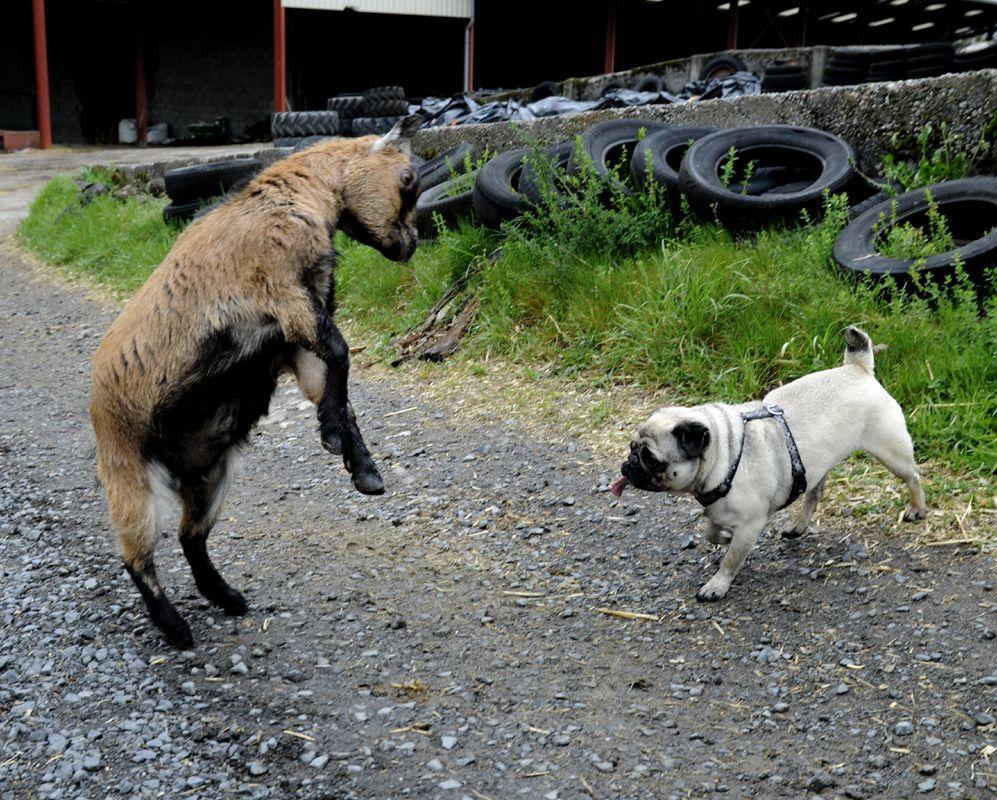 Pour cette photo aucun animal n'a été blessé ou tué&#x3B; juste Valentine qui voulait jouer avec Diogène