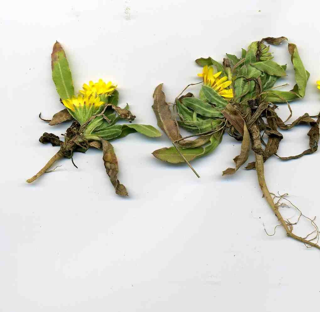 photo ou la plante dévoile même ses racines