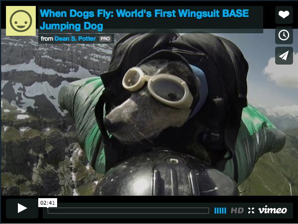 Base-Jump Canin!!