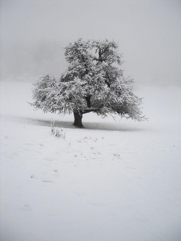 Or blanc…