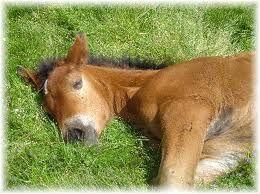 Le cheval, indépendant et travailleur. Le bois,émergence. Que du bon quoi !