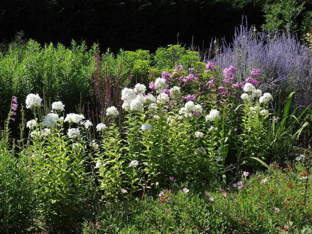 Jardins de l'école du Breuil - Bois de Vincennes - Parterre fleuri