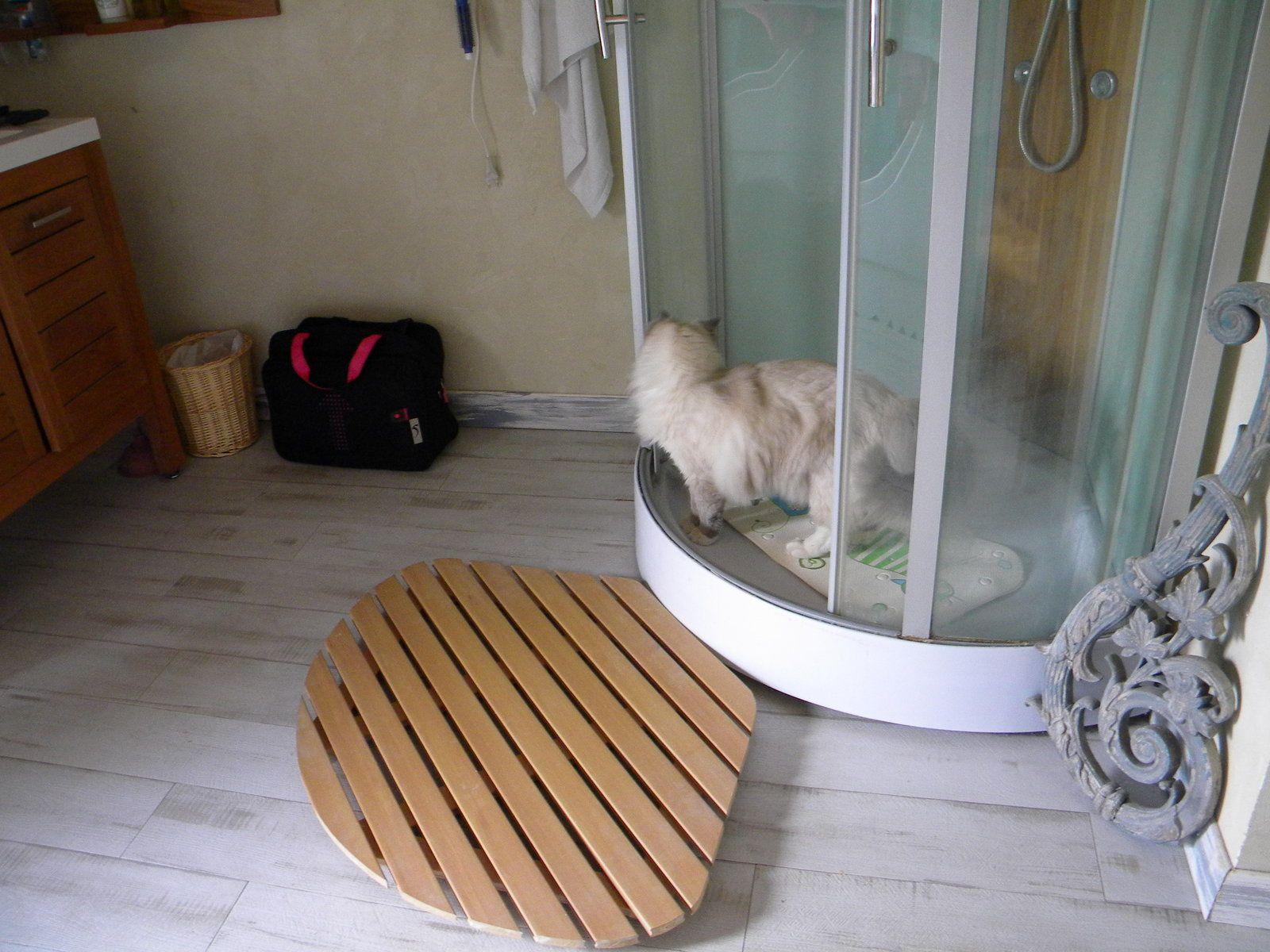La salle d'eau très appréciée de Jude
