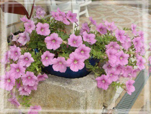 Des fleurs pour Greenye