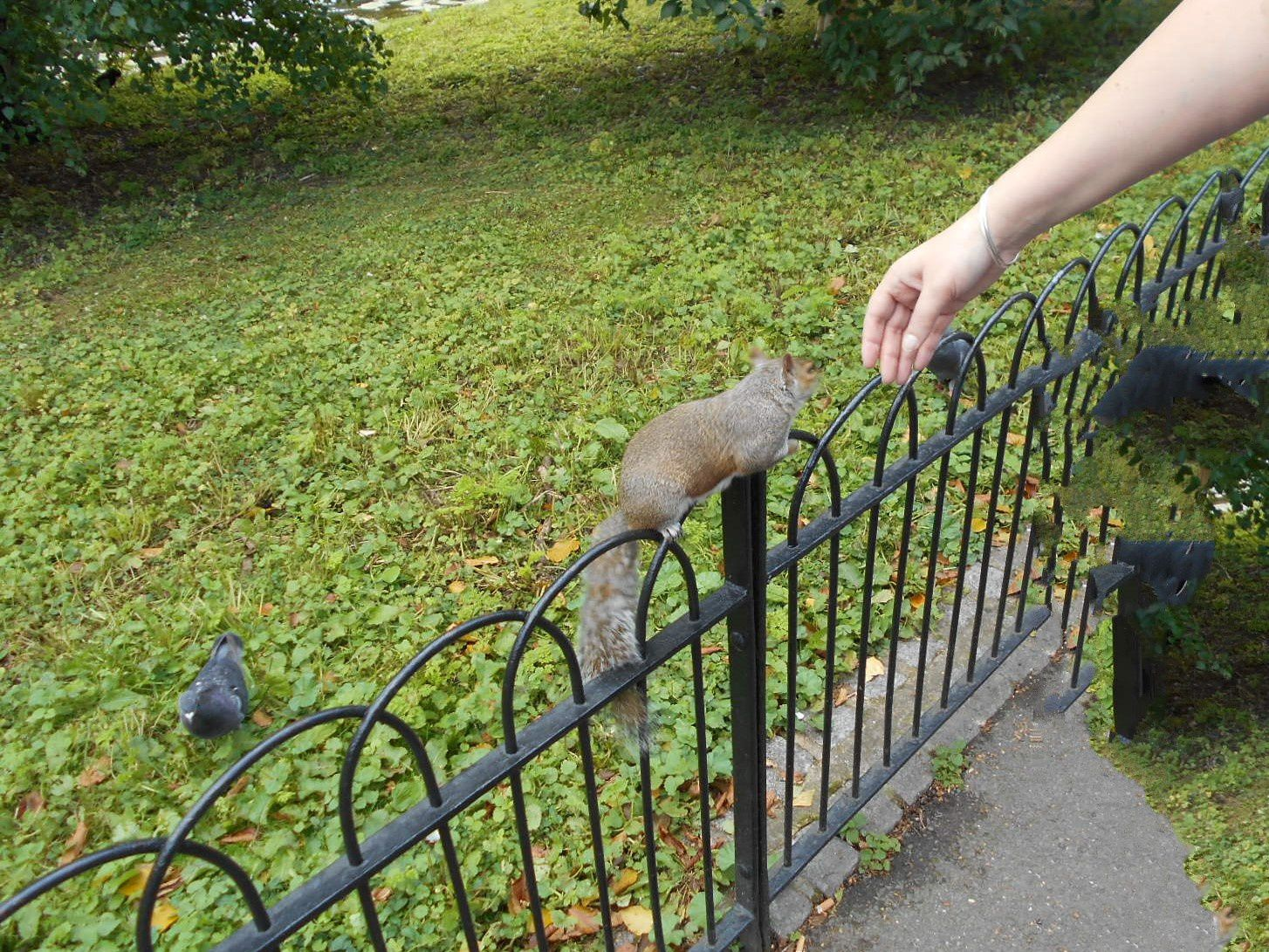 St James Park et Buckingham Palace (les écureuils viennent manger dans votre main)