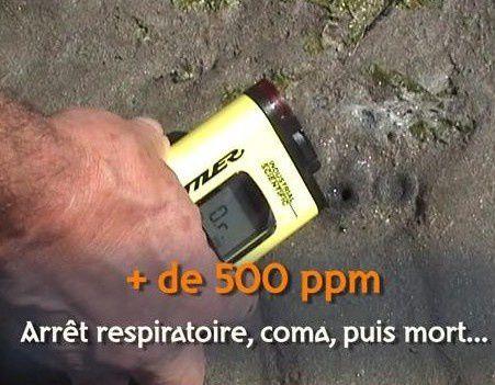 Toxicité des algues vertes : démonstration en VIDEO