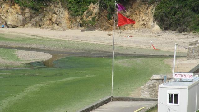 Plage du Ris : baignade interdite et algues vertes 3 septembre 2015 (photo Ouest-France