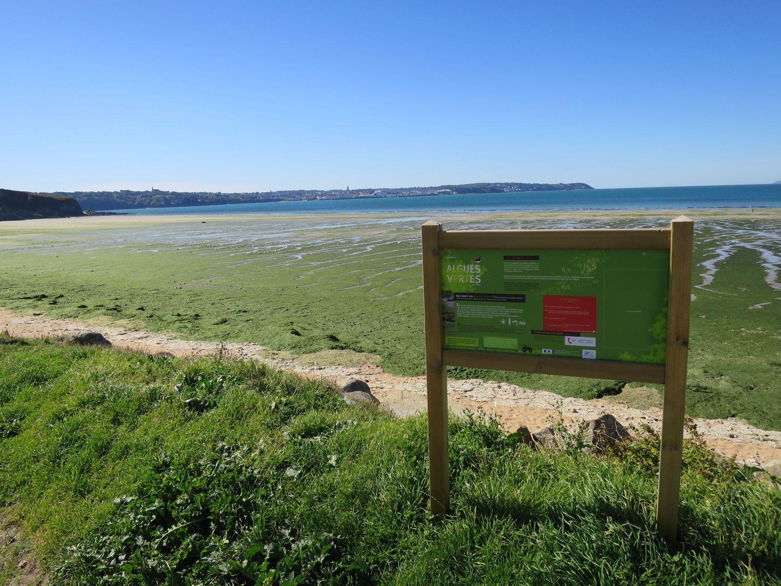 Tresmalaouen ne désemplit toujours pas...d'algues vertes