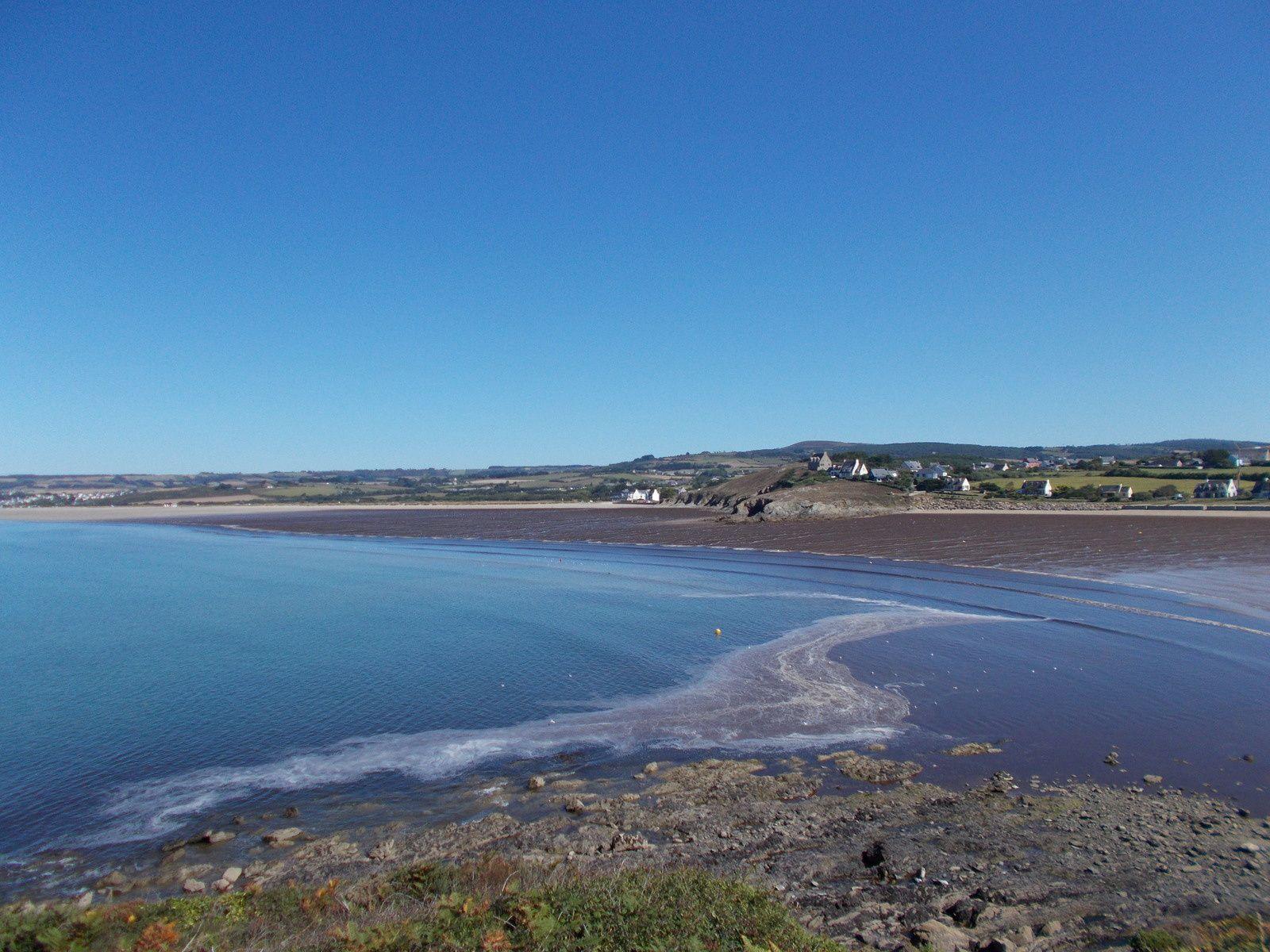 Algues brunes (&quot&#x3B;glandour&quot&#x3B;) à Plomodiern de la Pointe de Talagrip  30 août 2016