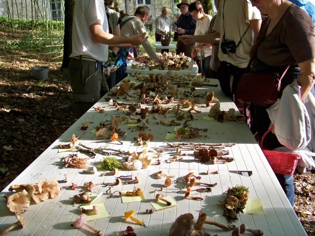 Sortie champignons du 20 octobre 2013