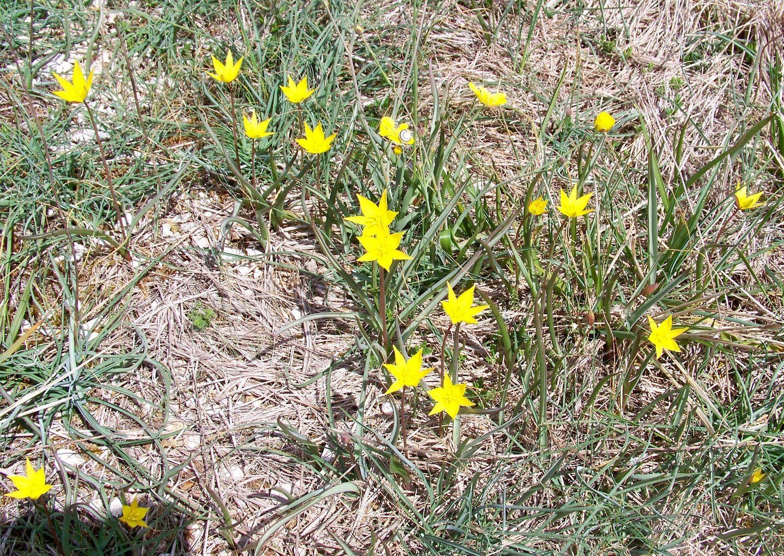 Le plateau d'Argentine en fleurs