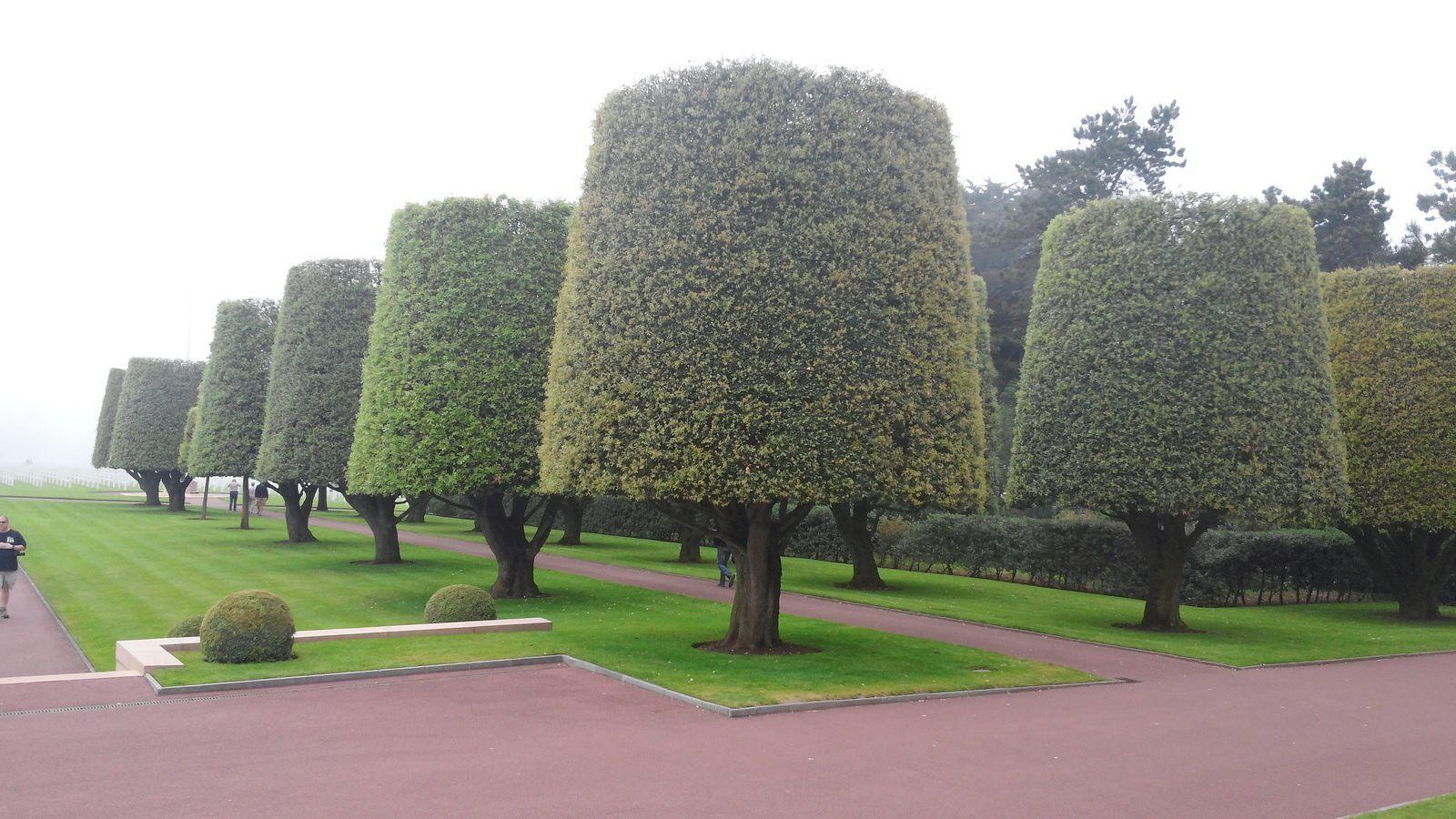 Divers arbres superbement bien taillés, agrémentent les pelouses superbement bien entretenues.
