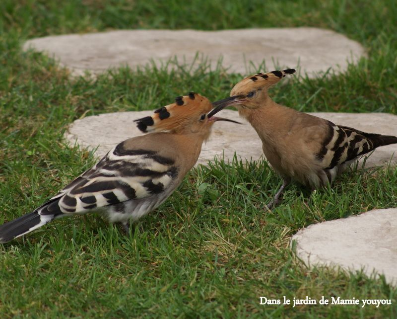Oiseaux dans le jardin mamie youyou - Mamie baise dans le jardin ...