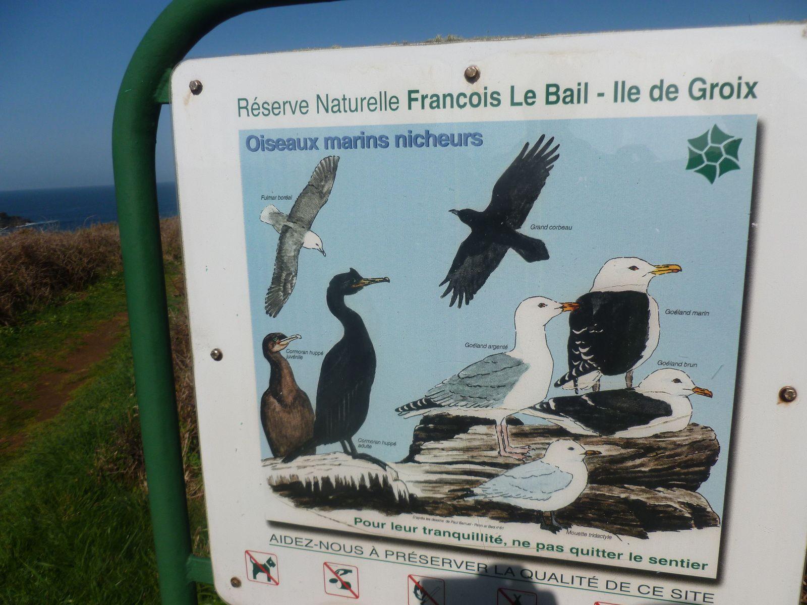 intéressant spectacle d'un caseyeur en pêche face à Porh an Hal, les oiseaux de la réserve Fr Le Bail,traversée du landier de Pen Men,
