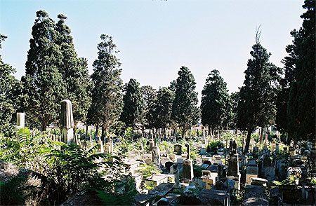 Le cimetière Saint Eugène d'Alger, là où reposent mes morts.