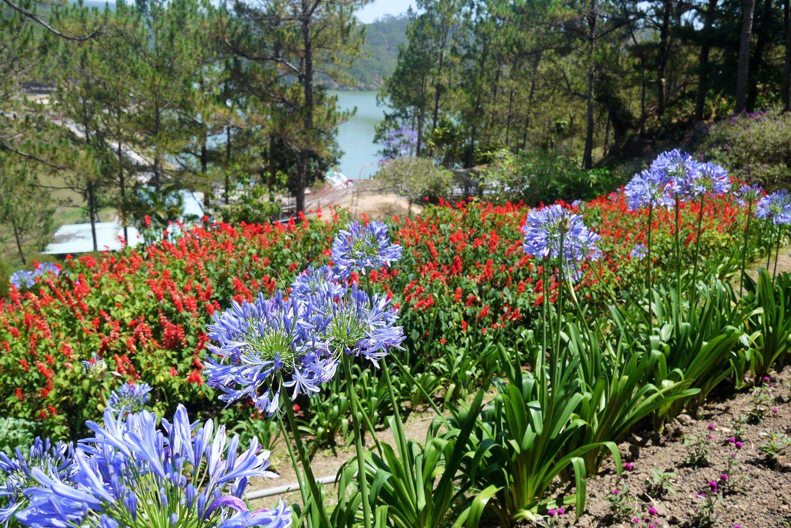 Les ornements et les massifs de fleurs sont riches de couleurs