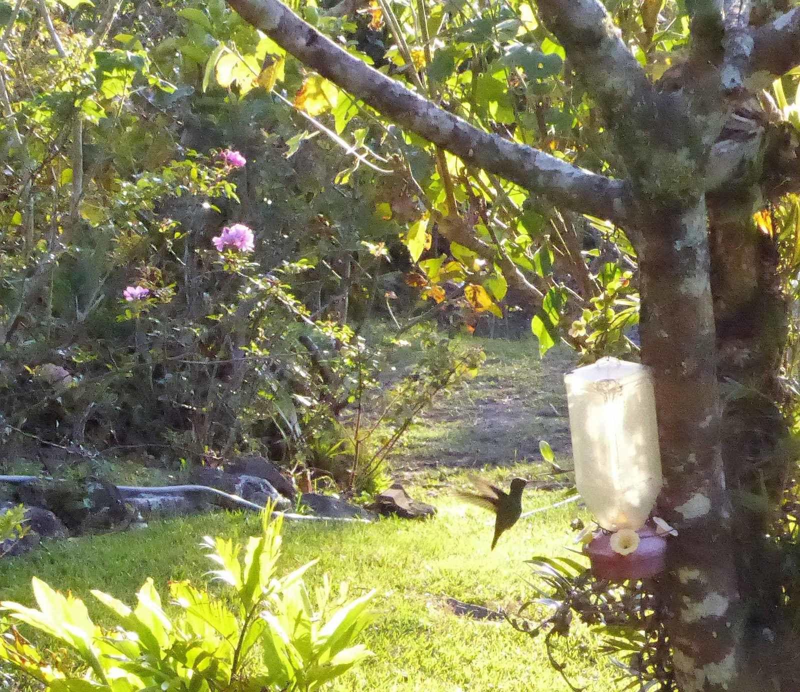 Sauf que… la ténacité de Jeanine a frappé : voilà le colibri !