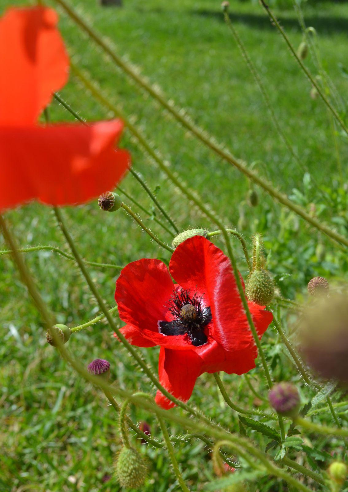 Dans le jardin de ma mère, Oui j' y ai même vu un magnifique pivert.