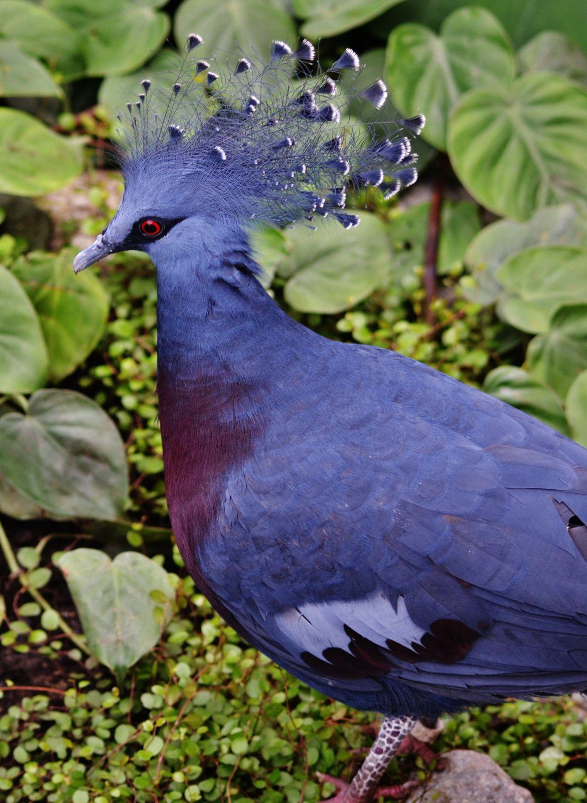 La nouvelle serre tropicale des oiseaux
