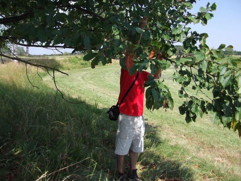 Un cerisier au bord de la route nous offre le déssert