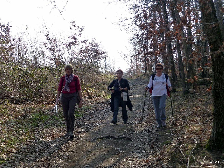 Nous attaquons une descente dans les bois.