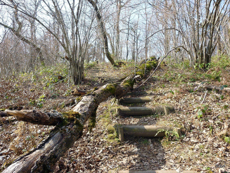 heureusement il y a des rondins de bois pour faire des marches, cela aide bien.