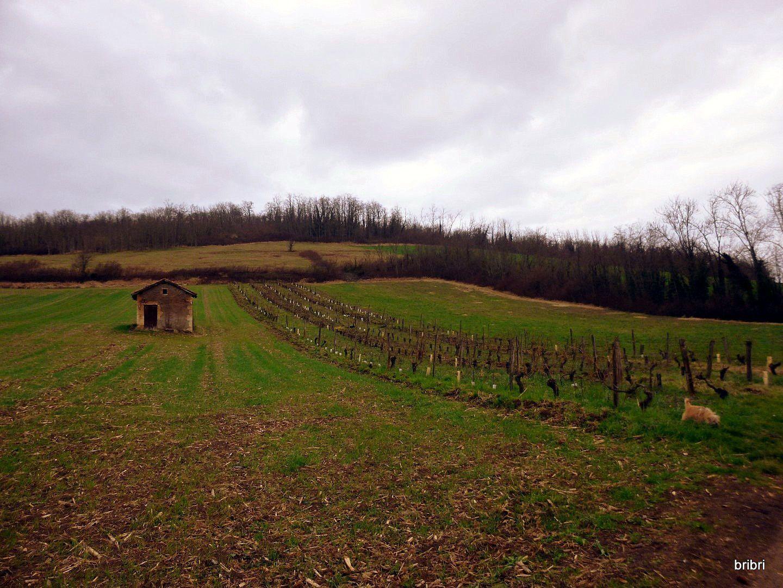 Toujours accompagnés de la pluie qui s'est un peu calmée nous longeons une vigne avec sa tonne.