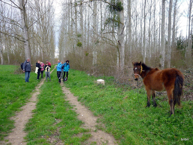 Un pauvre petit cheval abandonné, attaché au milieu du chemin, sans eau, il était peureux et n'a rien accepté venant de nous. Nous avons fait la pause vers lui. Cela nous a crevé le coeur de le laisser ainsi.