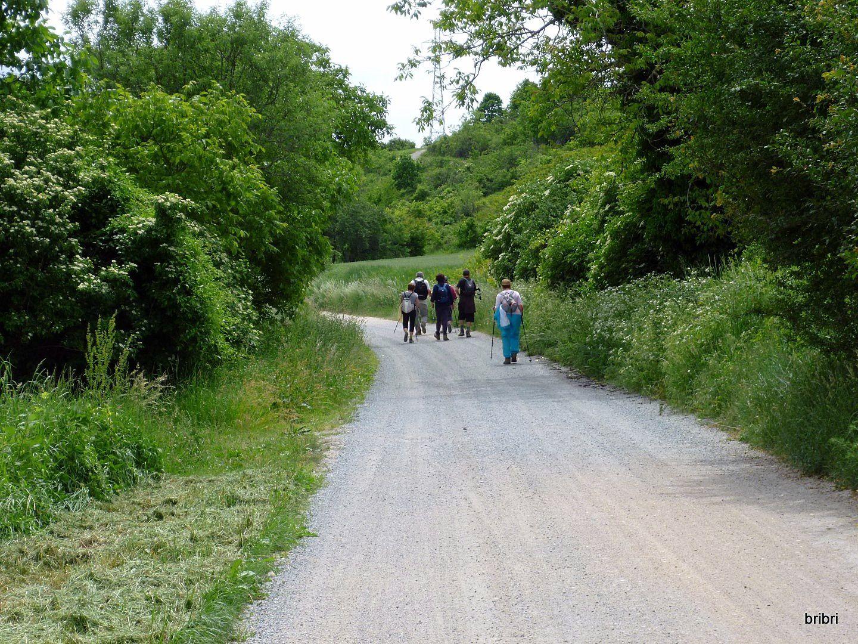 C'est un chemin plat, parfait pour Jacline, avec beaucoup de vignes autour.