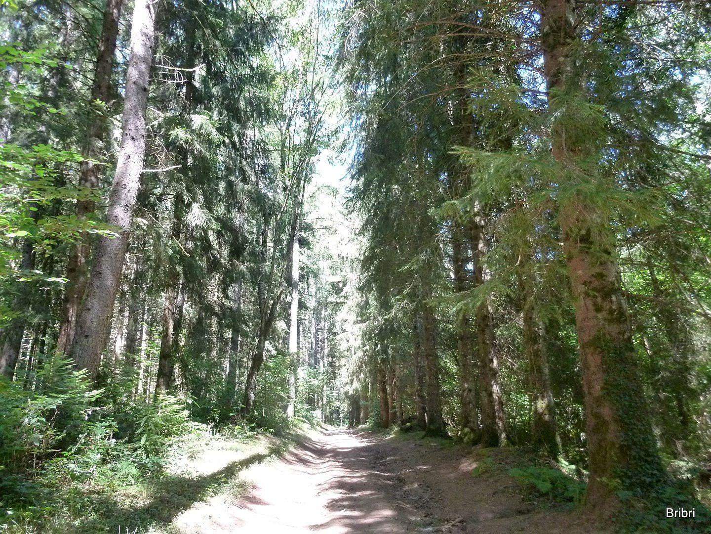 Beaucoup d'ombre sur tout le parcours avec des haies et des arbres de chaque coté. Nous restons longtemps dans ce bois.