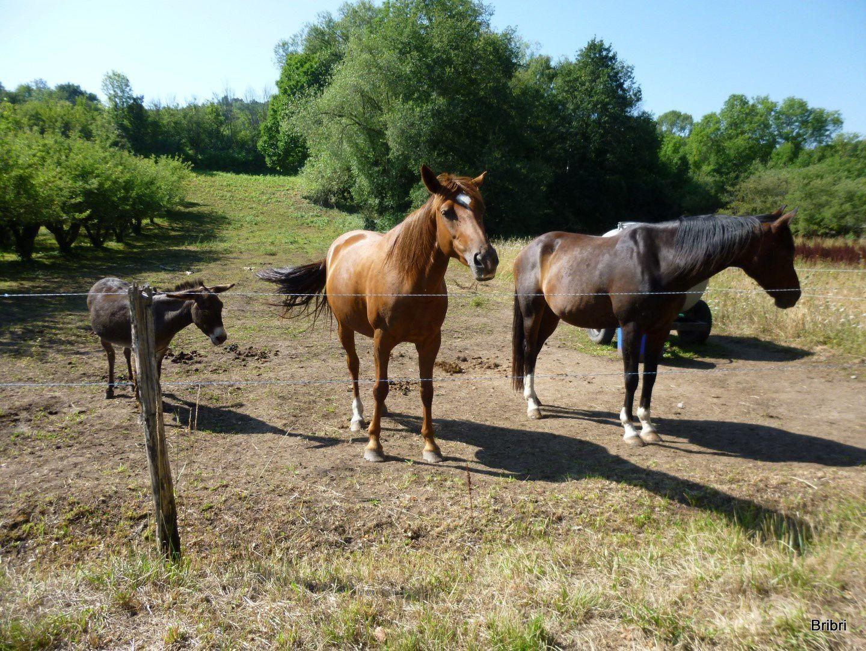 Papa, maman et le petit, ils sont mignons. Nous croiserons plusieurs vététistes, chacun son sport.